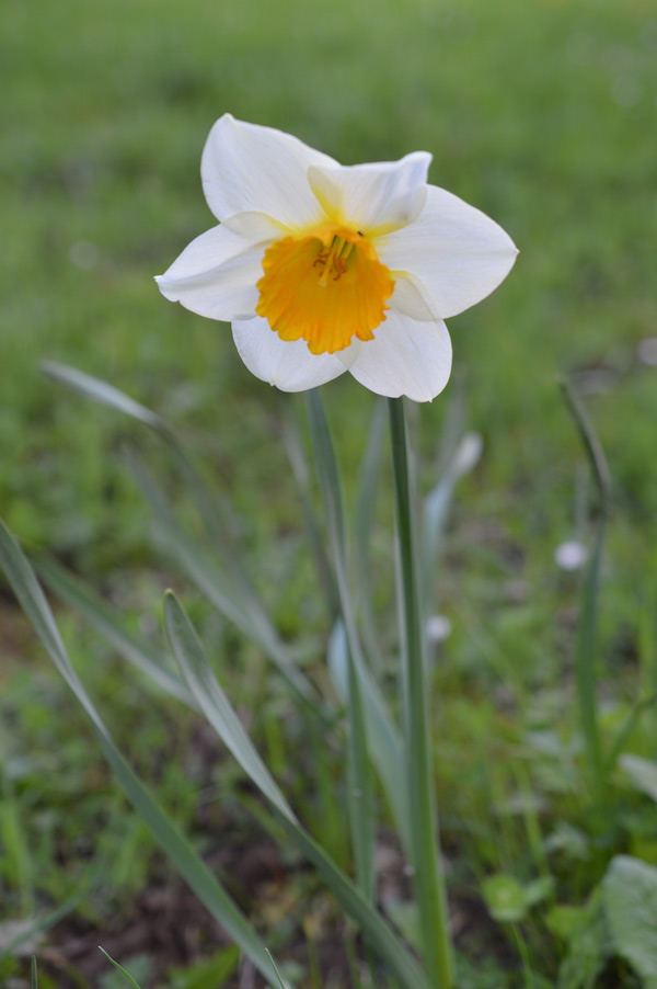 primavera-4