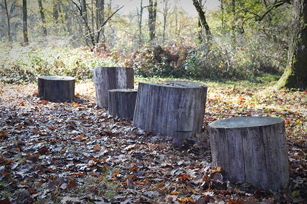 AllYourSites-bosque-de-orgi-8