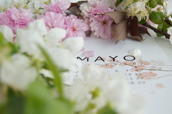 AllYourSites-DESCARGABLE MAYO-3