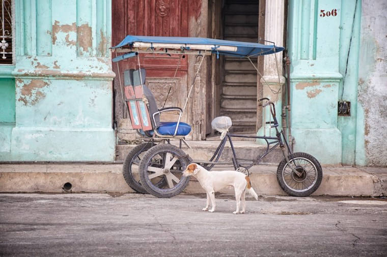 Dog and bicycle taxi