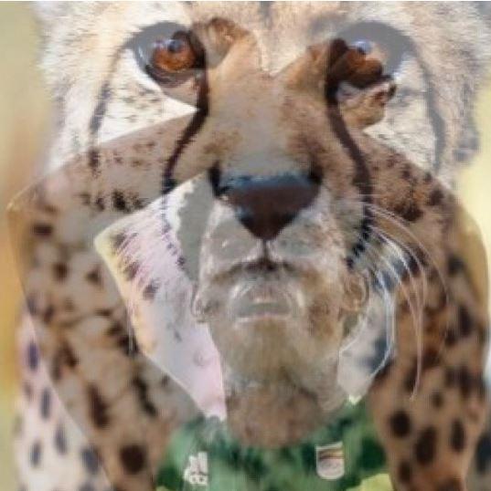 Cheetah 14