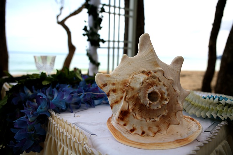 Ginger Flower Tea Hawaiian Conch Shell Used For Weddings