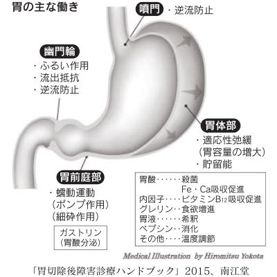 胃の主な働き