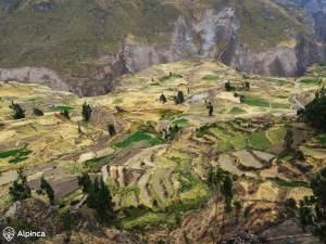 colca-canyon-terraces