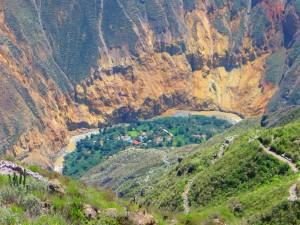 Alpinca Oasis colca