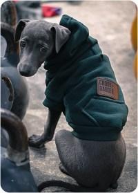Sporting A Dog Hoodie For Fashion Or Function   Dog Bandanas