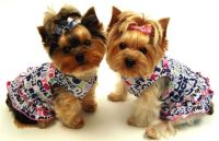 Smarten Up Your Pet With Cute Dog Clothes   Dog Bandanas