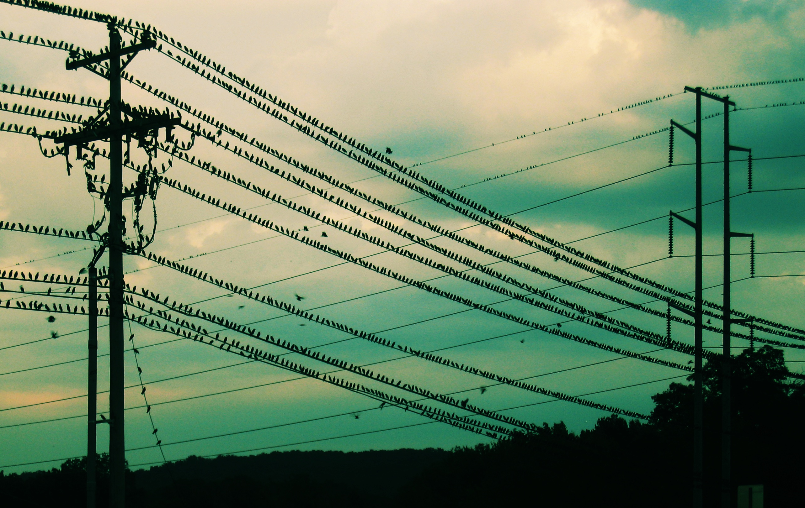 how do birds sit on power lines without getting