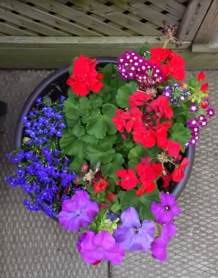 flower pot of flowers