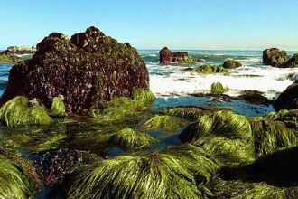seaweed_rocks2_wiki