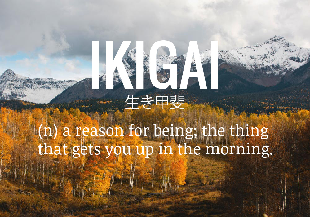 Passion Wallpaper Quote Ikigai The Reason You Get Up In The Morning