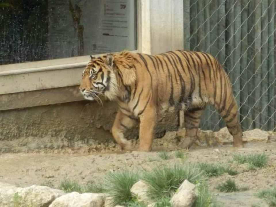 Vale dos Tigres - Zoo