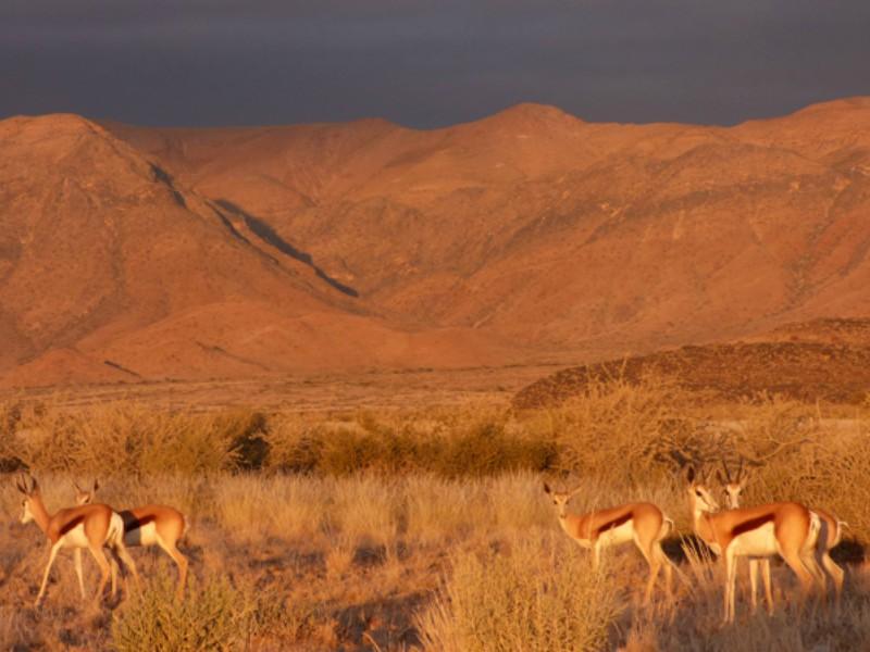 Safari no Parque Etosha