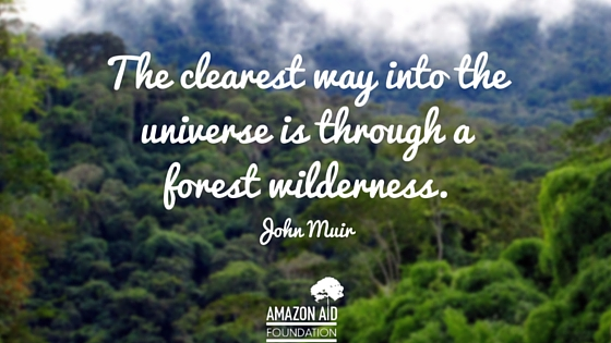 Fall Of Quotations Wallpapers 9 Inspiring Quotes About Forests
