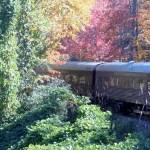 Autumn Travel on the Great Smoky Mountain Railroad