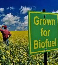 biocarburanti_sostenibilità