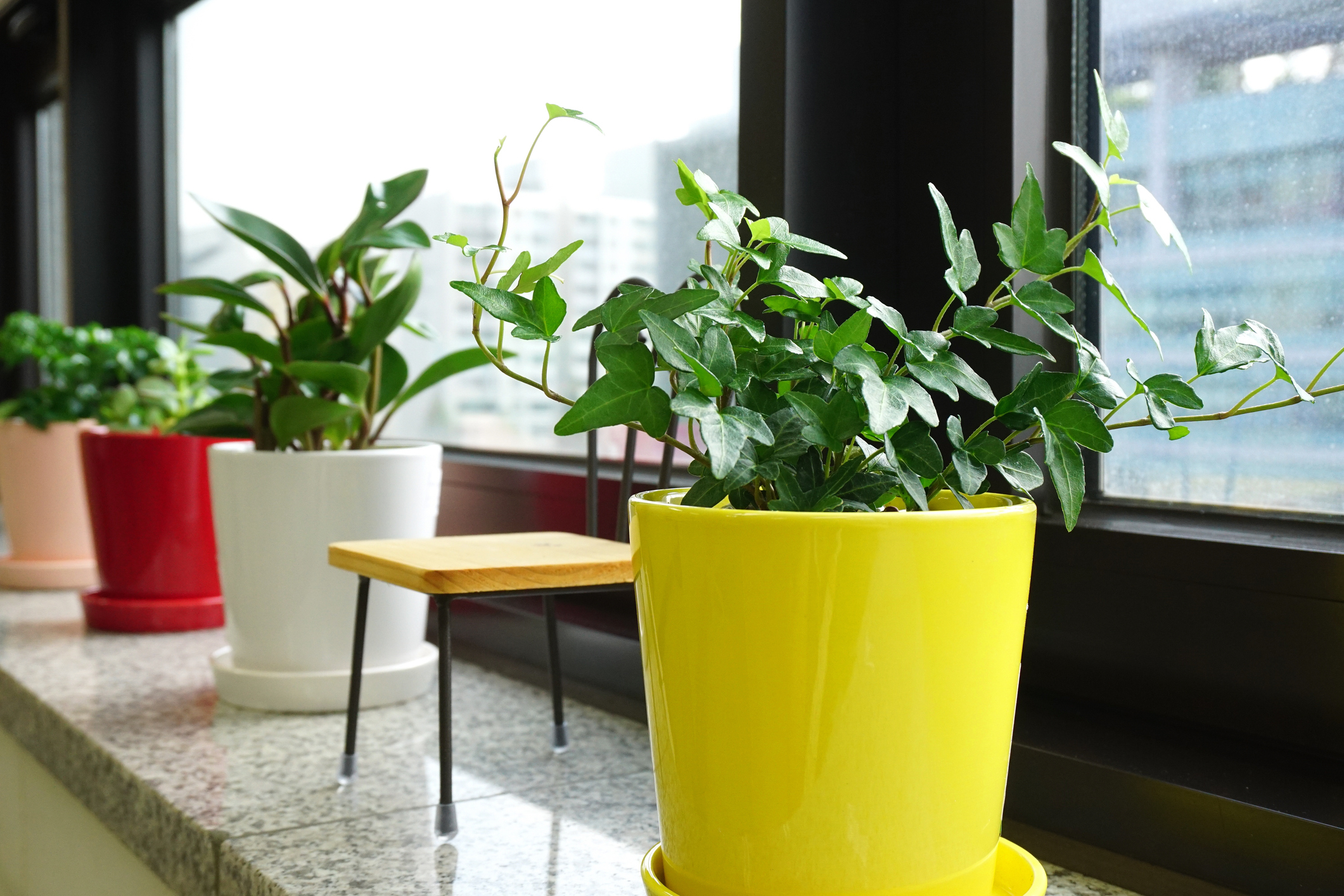 How To Plant Indoor Plants The Ultimate Guide To Indoor Plants Greener On The Inside