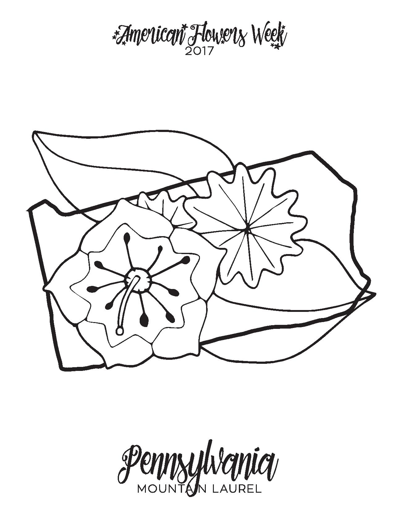 mountain laurel coloring page