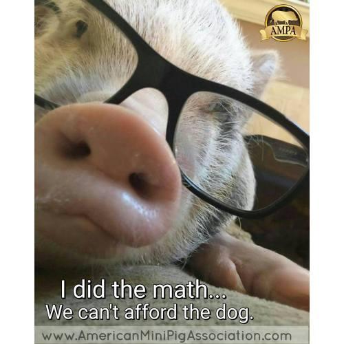 Medium Crop Of Pig The Dog