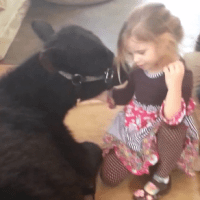 5-Year-Old Lets The Family Cow In The House: Here's Her Cute Explanation