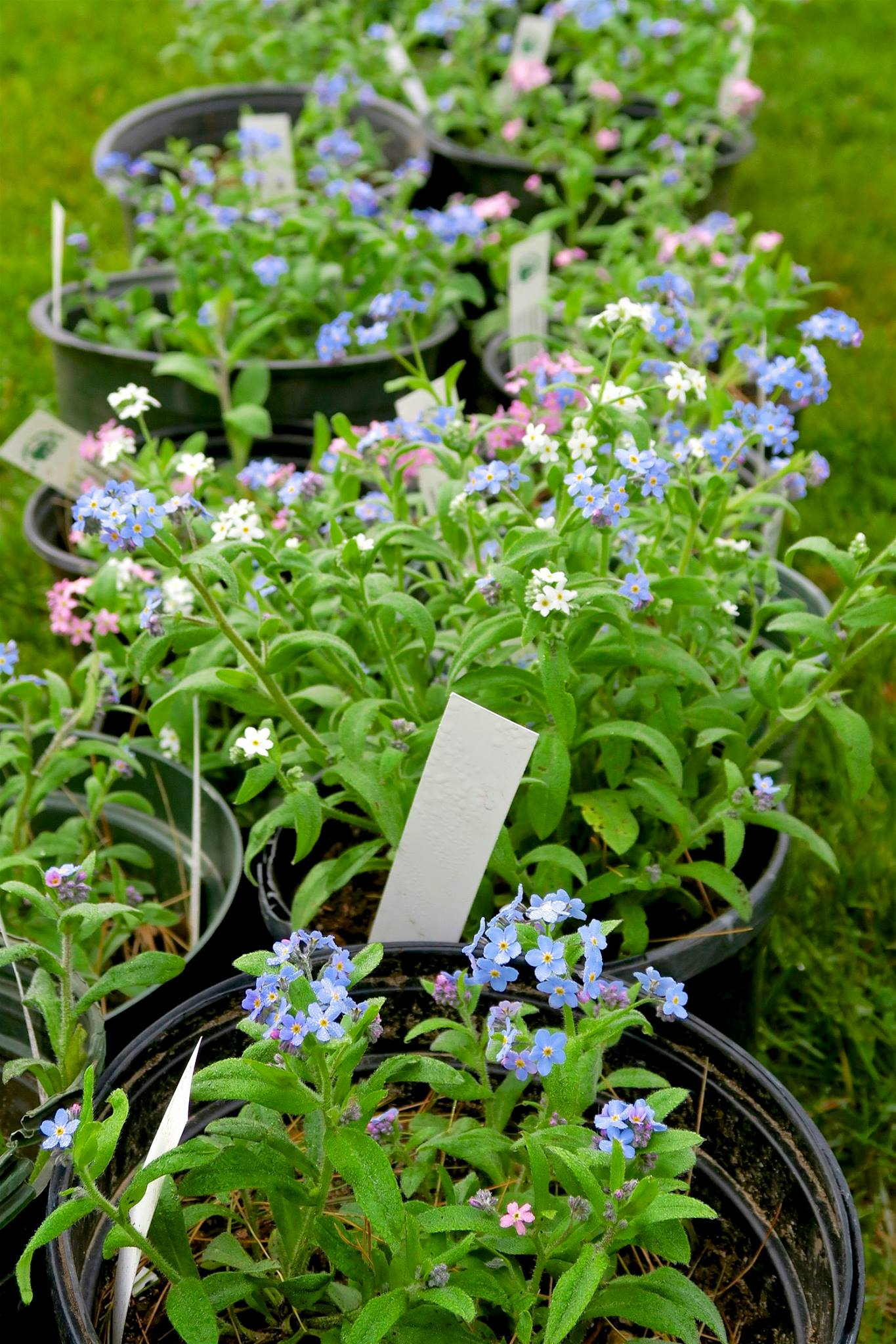 Garden Sale Plant Sale The Amherst Nh Garden Club
