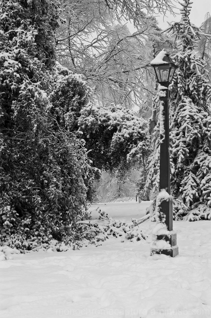 Narnia Landscape Rural Photos Monochrome Capture