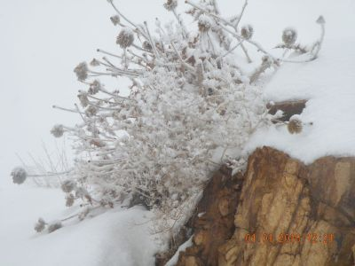 گیاه در زمستان - Plant & Nature Photos - myda's Photoblog