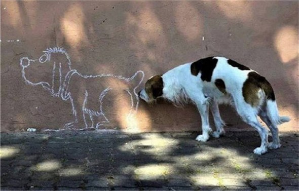 dog-sniff