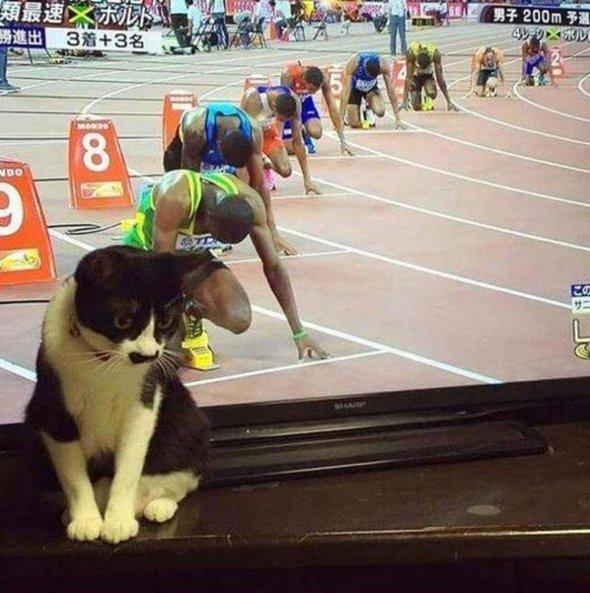 kitty-starting-line