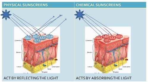 sunscreens-chemical-vs-physical1