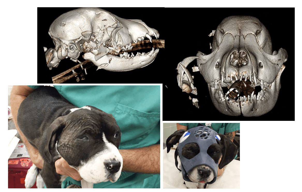 D Print 3 Dimensional Printing In Veterinary Medicine