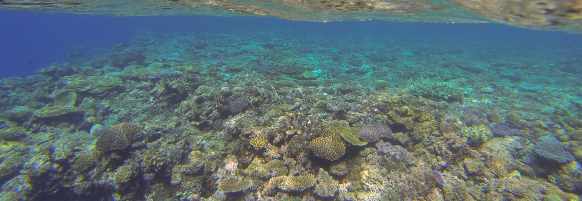Underwater seascape near Vatu-i-Ra