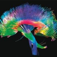 What does the world look like through the eyes of a neuroscientist?