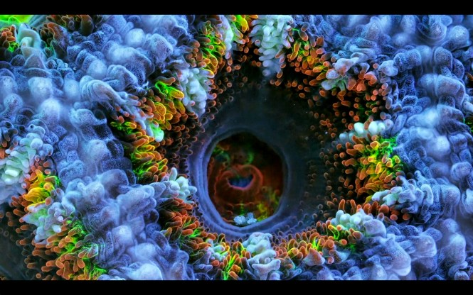 macro coral image Daniel Stupin in Slow Life Video, coral, macro coral, photography, nature