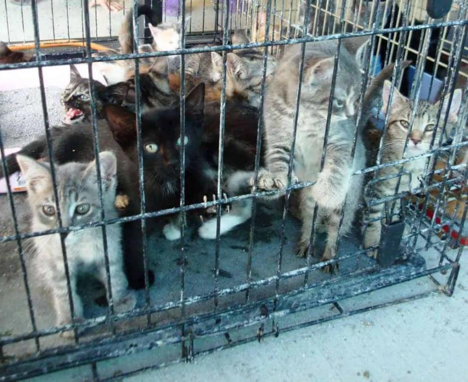 shelter-kittens