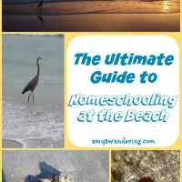 The Ultimate Guide to Homeschooling at the Beach