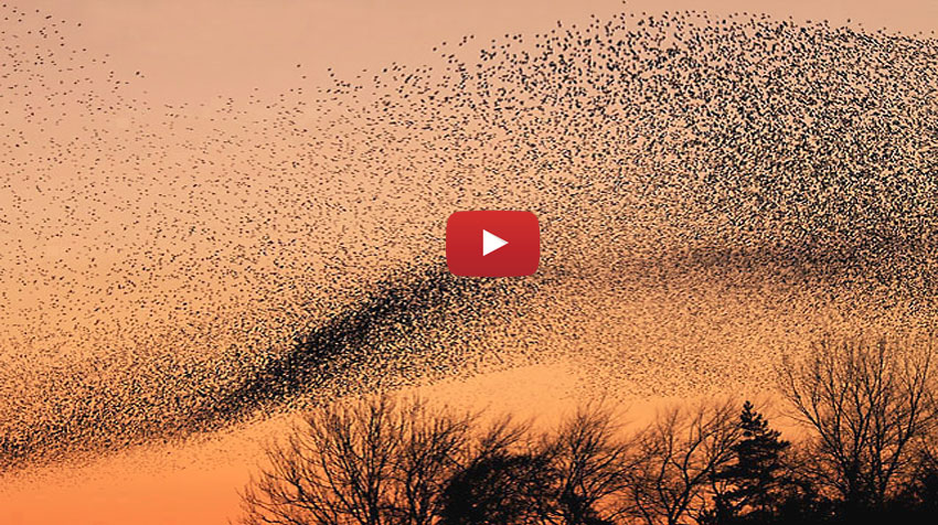 amazing_world-most-awesome-nature-video-ever