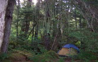 Living with the Ewoks in the Northern Temperate Rainforest