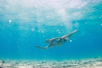 Woman swimming sideways underwater in the pure blue Fiji water