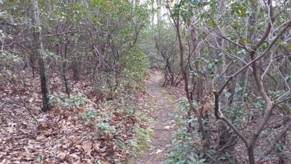 Brimstone Trail Path