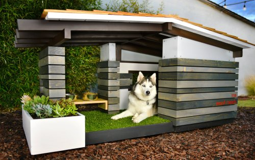 Medium Of The Dog House