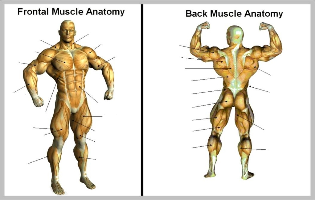 Anatomy System - Human Body Anatomy diagram and chart images Human