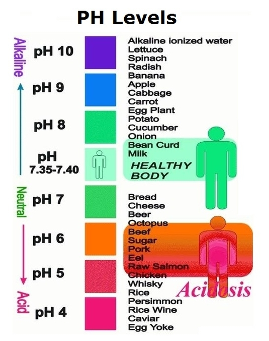 human body ph diagram Anatomy System - Human Body Anatomy diagram - ph chart