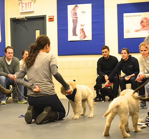Group Classes Andrea Arden Dog Training