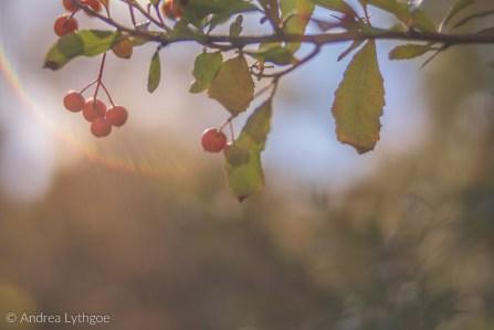 FallFoliage-3