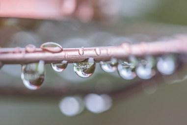 Wet Feeder-8