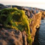 The macro thing again, algae on the rock ledge.