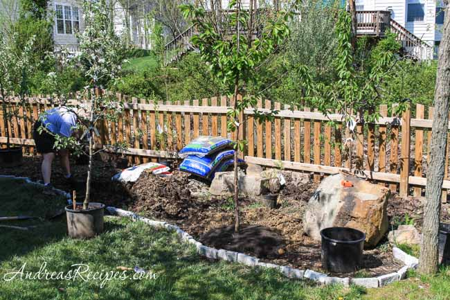 Andrea's Recipes - Planting Apple and Cherry Trees