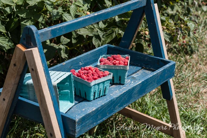 Andrea Meyers - Raspberry picking at Wegmeyer Farms