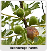 Andrea Meyers - The Farm Project: Ticonderoga Farms